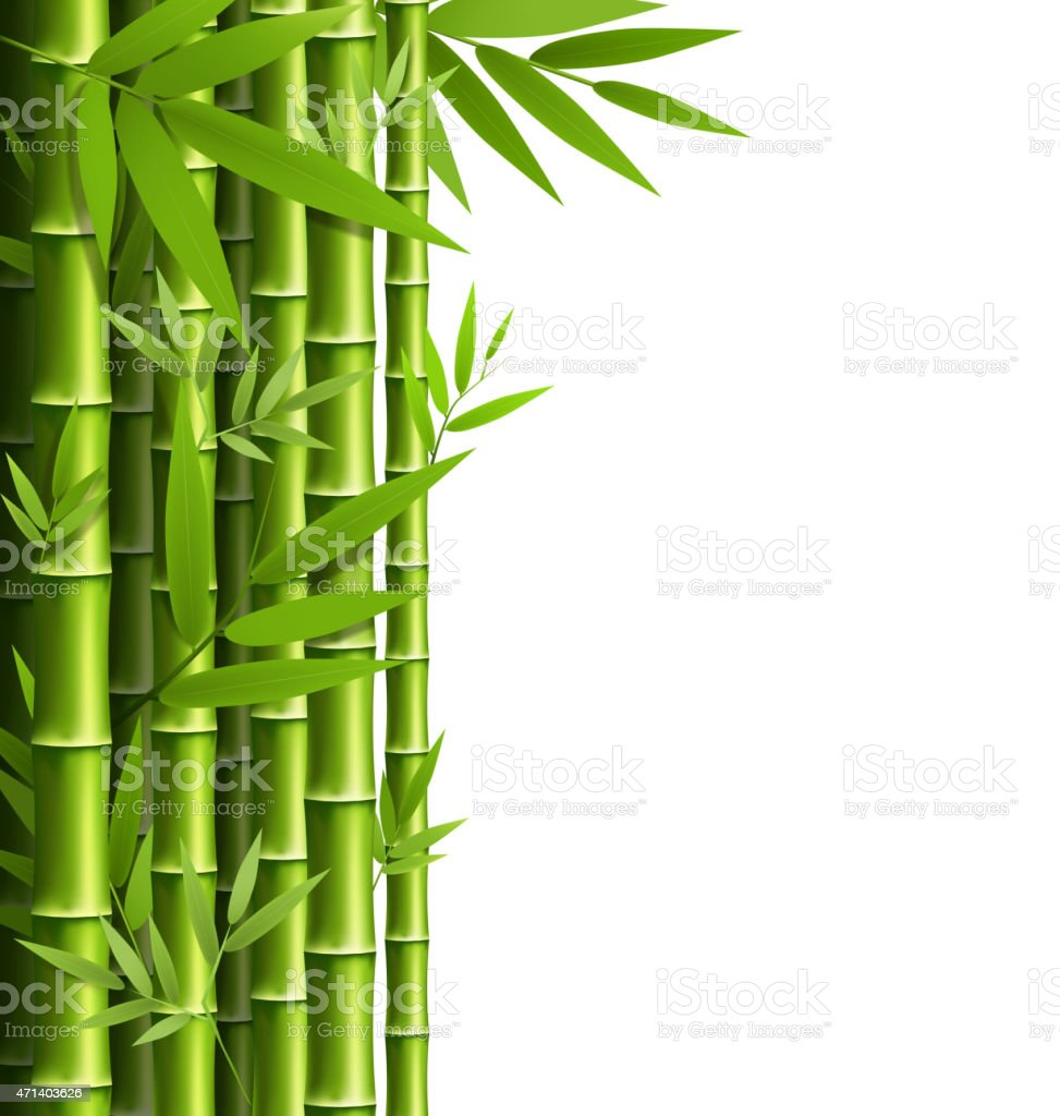 Green bamboo grove isolated on white vector art illustration