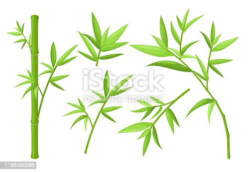 Green bamboo stems and leaves colorful vector illustrations set. Asian exotic tropical plants isolated on white background. China rainforest oriental flora. Jungle trees collection