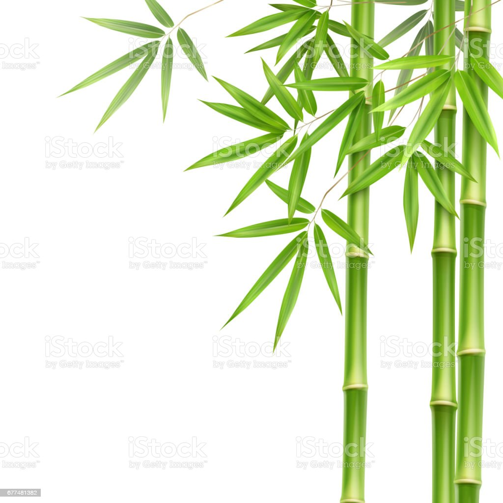 Green bamboo stems vector art illustration
