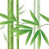 Green bamboo stems with leaves on white