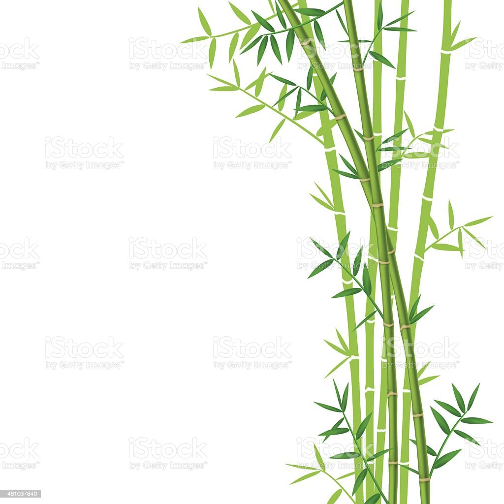Green bamboo向量藝術插圖