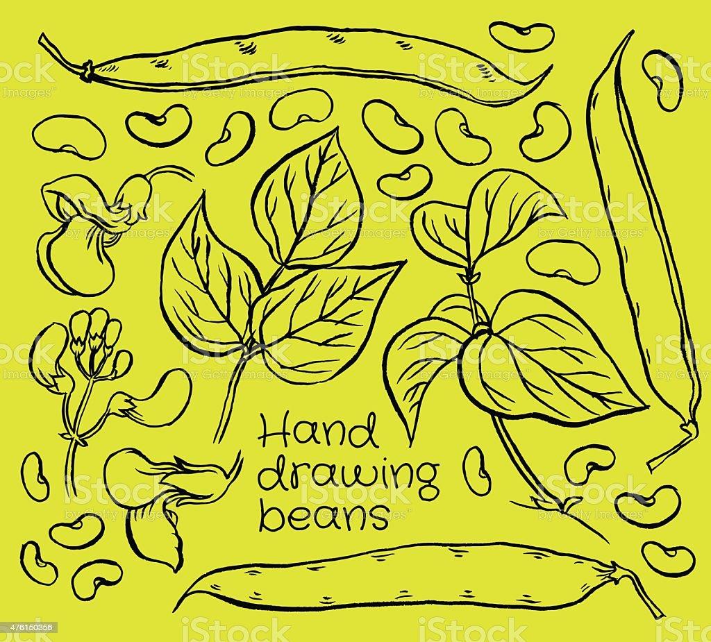 green beans vector art illustration