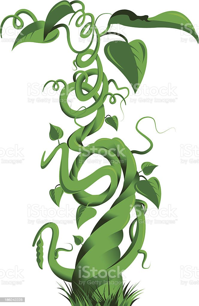 green beanstalk vector art illustration