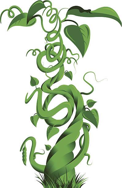 green beanstalk - plant stem stock illustrations