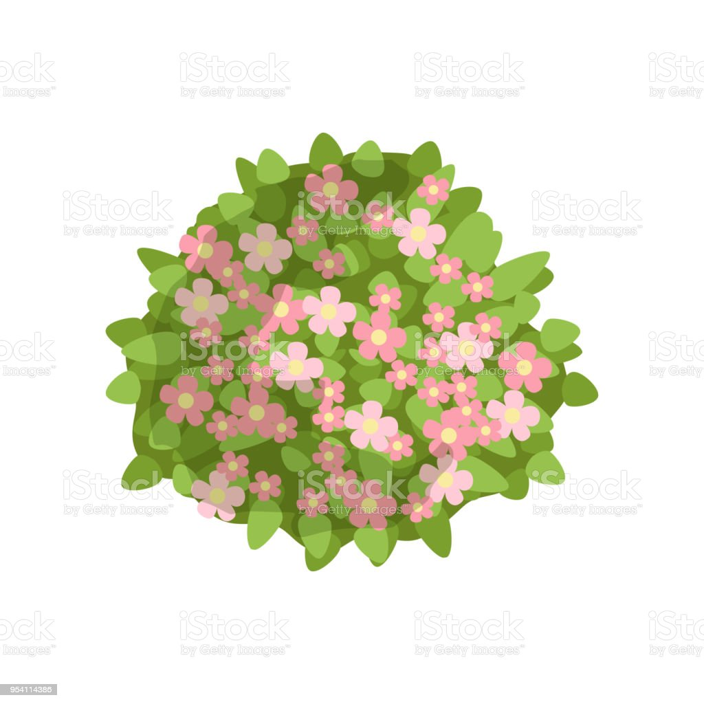 Green Bush With Pink Flowers Landscape Design Element Top View
