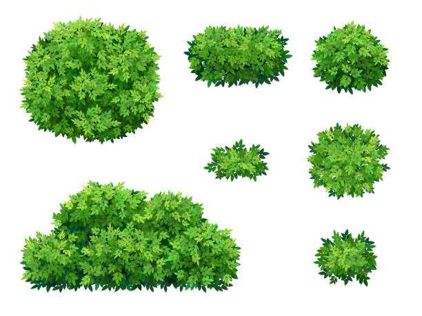 green bushes and tree crown. - куст stock illustrations