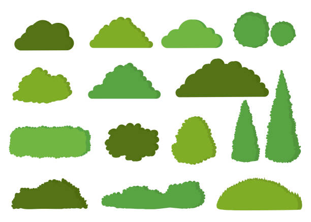 green bushes vector icon set isolated on white background - куст stock illustrations