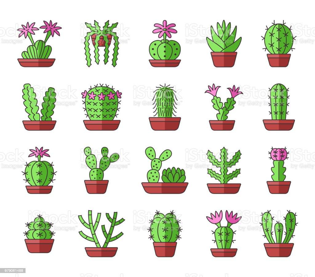 Grünen Kakteen Mit Rosa Blüten Wüstenpflanzen Für Terrarien Und