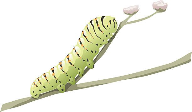 stockillustraties, clipart, cartoons en iconen met green caterpillar - rups