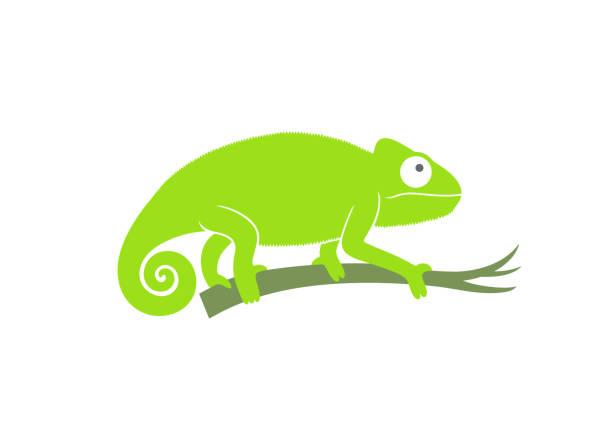 Green chameleon. Abstract chameleon on white background EPS 10. Vector illustration chameleon stock illustrations