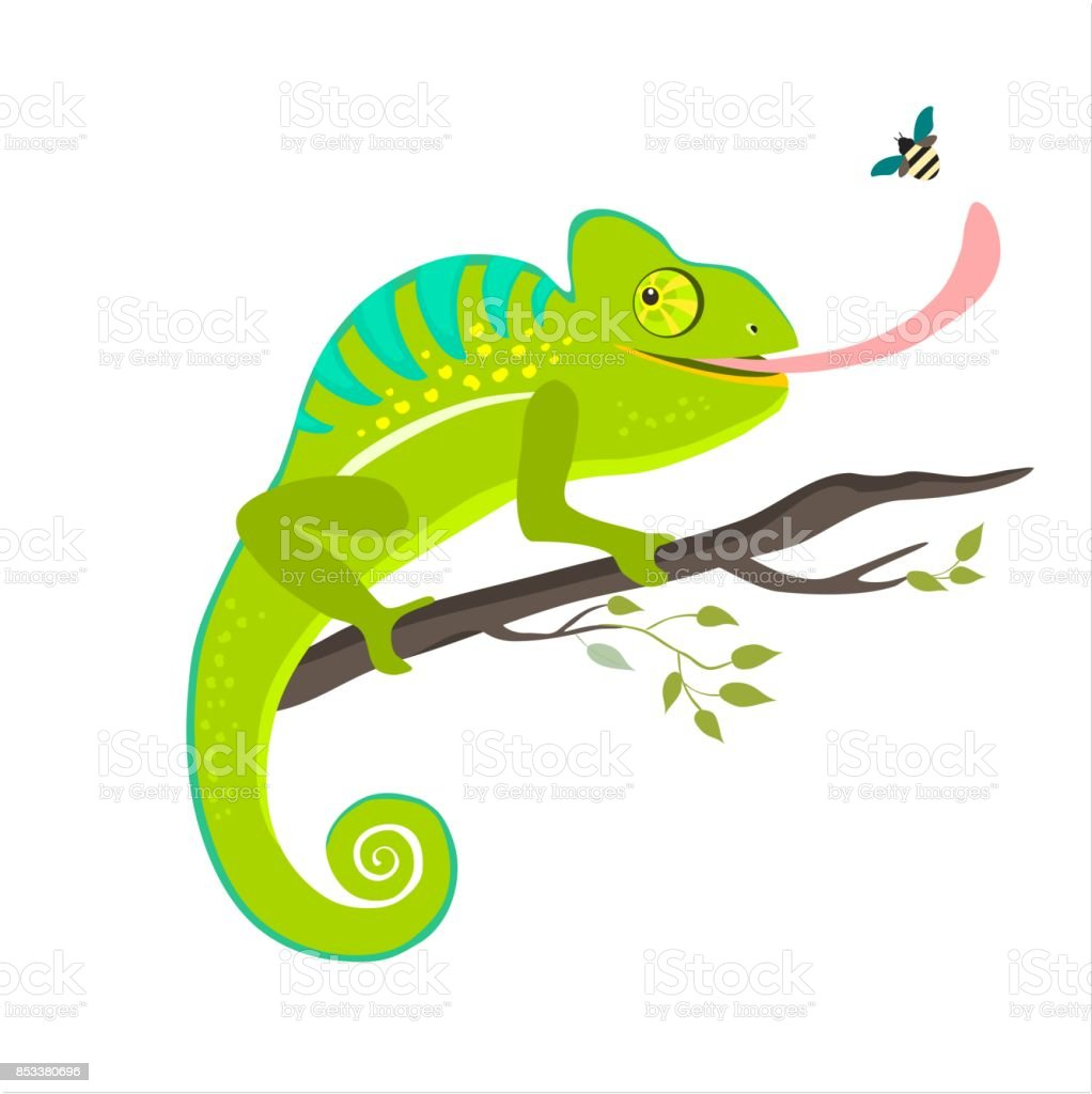 royalty free chameleon eyes clip art vector images illustrations rh istockphoto com veiled chameleon clipart the mixed up chameleon clipart