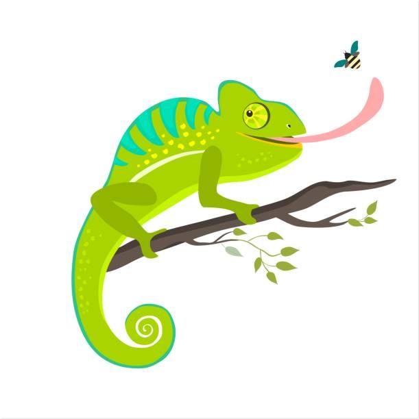 green chameleon sitting on the branch on white background - chameleon stock illustrations