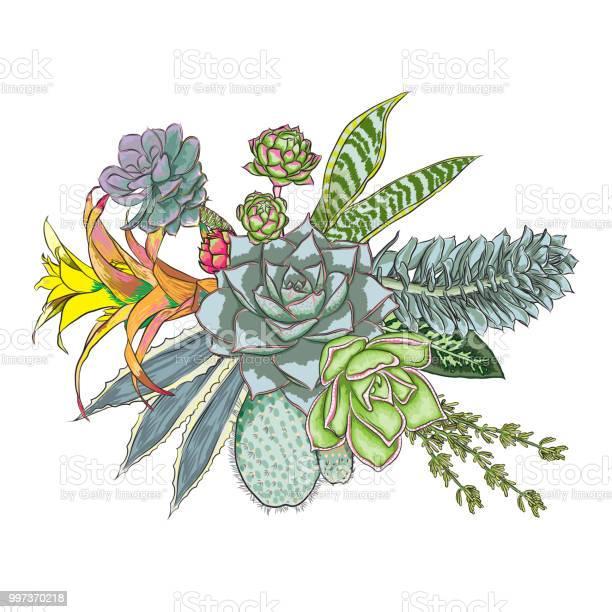 Green colorful succulent echeveria design bouquet imitation natural vector id997370218?b=1&k=6&m=997370218&s=612x612&h=zhsupbaocvyvjmt3psgn5o883vitneftm1mh9v5hrjs=