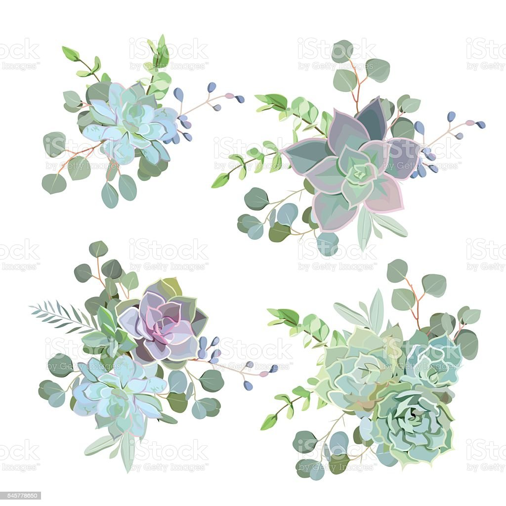 Green colorful succulent Echeveria vector design objects vector art illustration