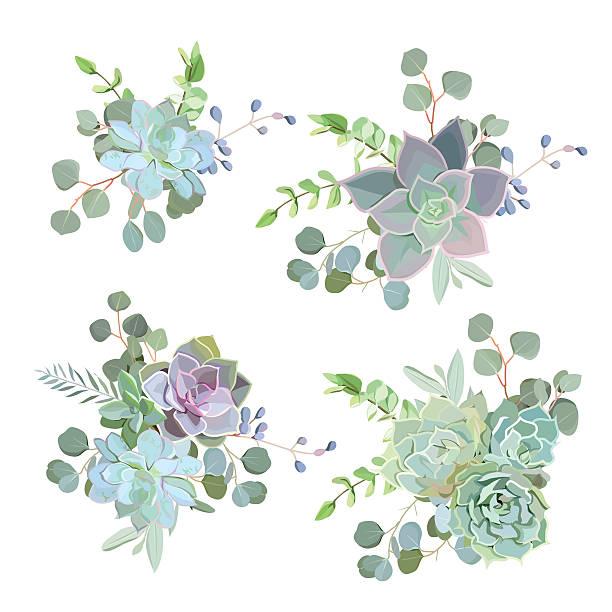 Green colorful succulent Echeveria vector design objects vector art illustration