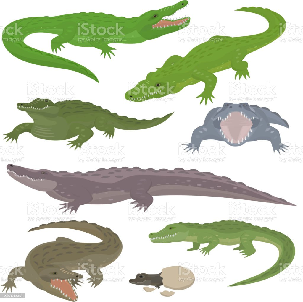 Green crocodile and alligator reptile wild animals vector illustration collection cartoon style vector art illustration
