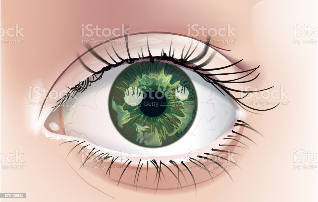 Green Eye vector art illustration