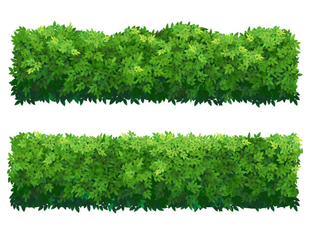 green fence - куст stock illustrations