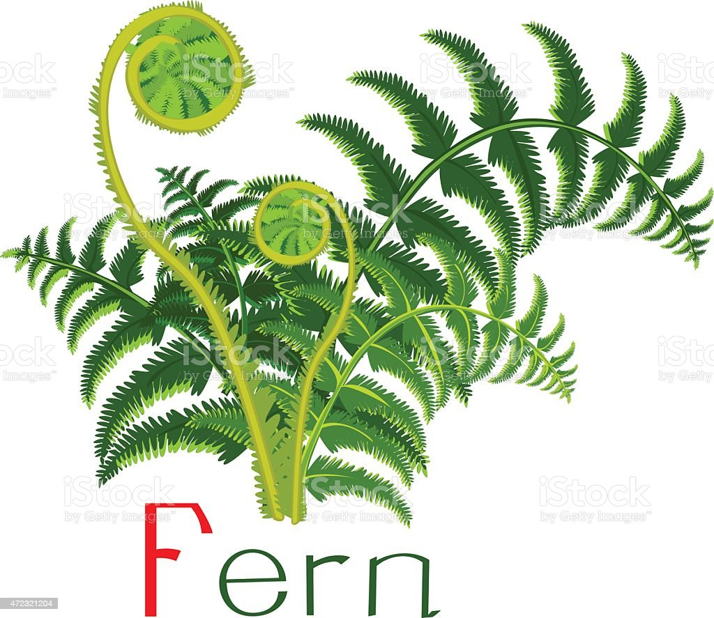 Green fern with title vector art illustration