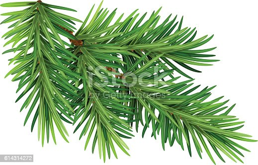 istock Green fluffy pine branch. Isolated on white background 614314272
