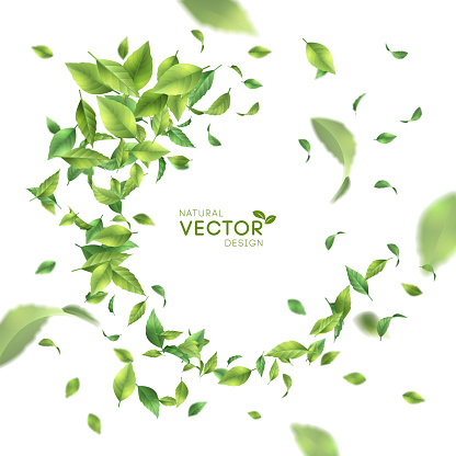 綠飛葉向量圖形及更多俄羅斯圖片