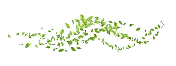 illustrazioni stock, clip art, cartoni animati e icone di tendenza di green flying leaves - foglie
