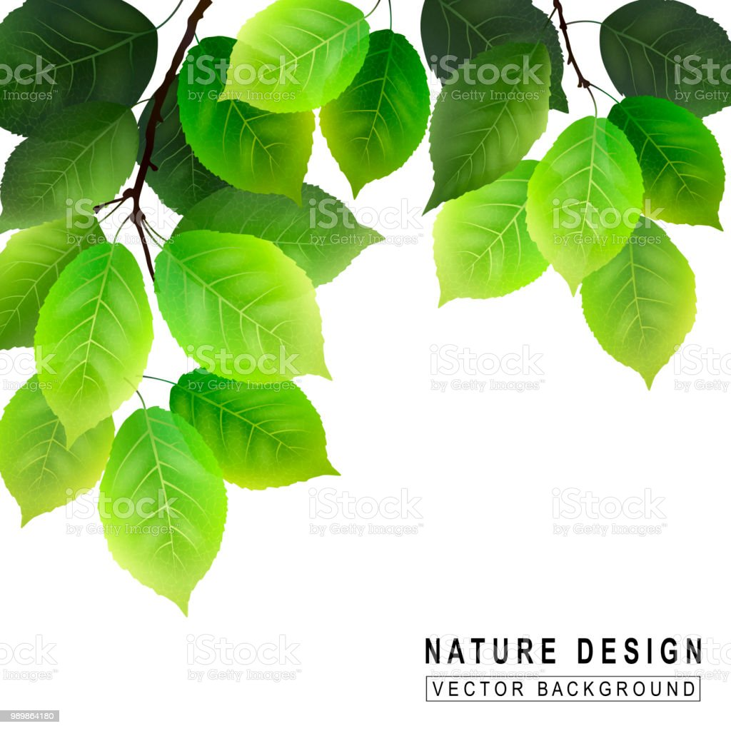 Green foliage on white background. Eco nature. Vector realistic...