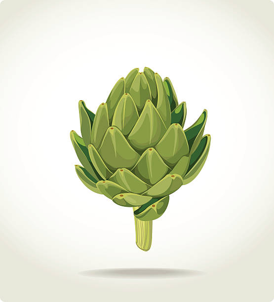 green fresh useful eco-friendly artichoke green fresh useful eco-friendly artichoke artichoke stock illustrations