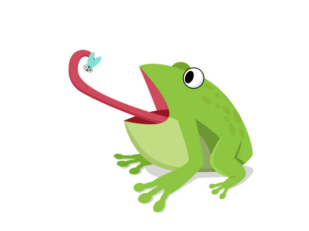 Royalty Free Frog Cartoon Clip Art, Vector Images ...