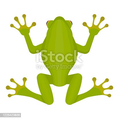 Green frog isolated on white background. Vector illustration. Eps 10.