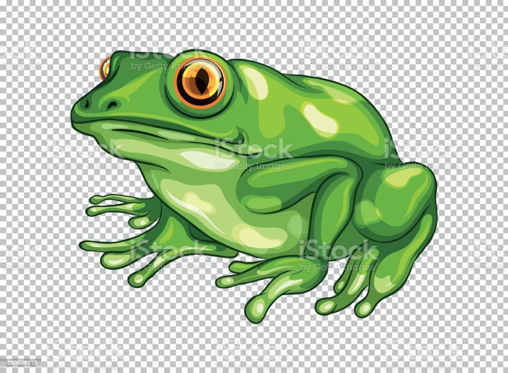 Green frog on transparent background vektorkonstillustration