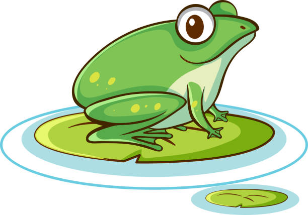 Grüner Frosch auf weißem Hintergrund – Vektorgrafik