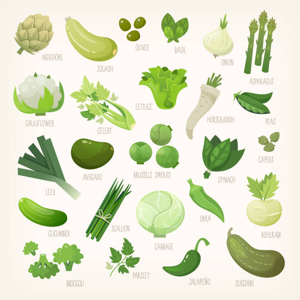 Green fruit and vegetables Variety of green and white common farm and exotic fruit and vegetables. List of plants from grocery store with their market names. Isolated vector icons. artichoke stock illustrations