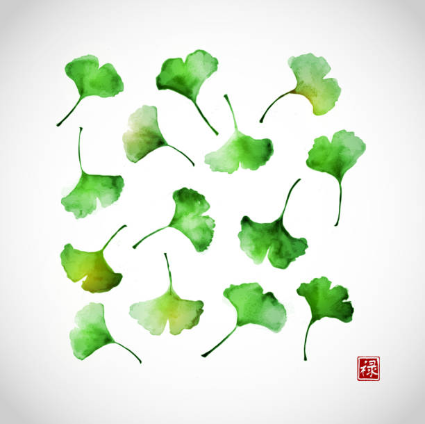 Green ginkgo biloba leaves Green ginkgo biloba leaves. Traditional Japanese ink painting sumi-e. Contains hieroglyph - well-being ginkgo stock illustrations