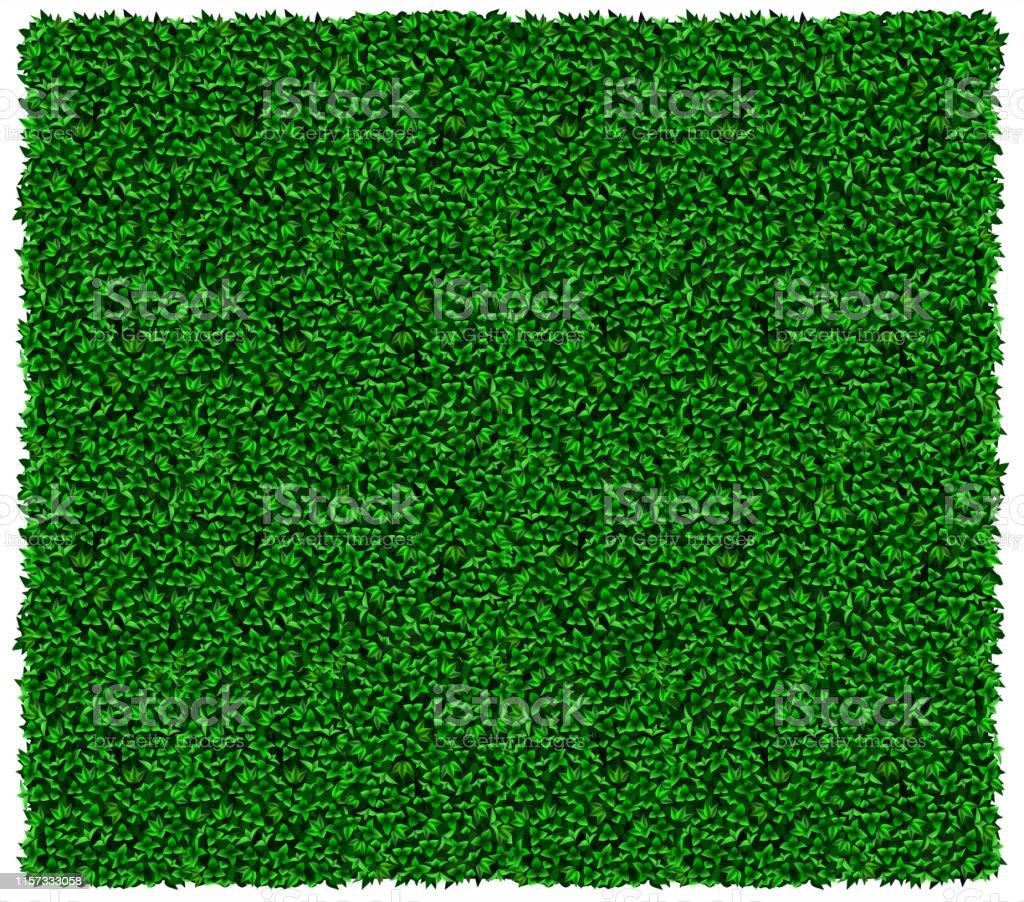 Groene druif of klimop muur textuur - Royalty-free Aangelegd vectorkunst
