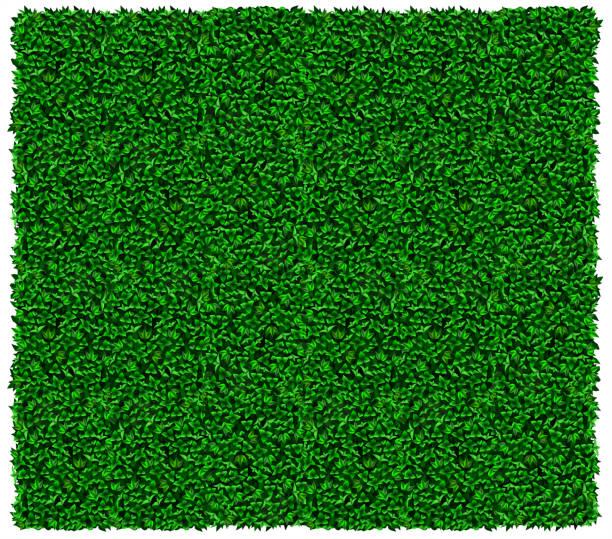 bildbanksillustrationer, clip art samt tecknat material och ikoner med grön druva eller murgröna vägg konsistens - murgröna