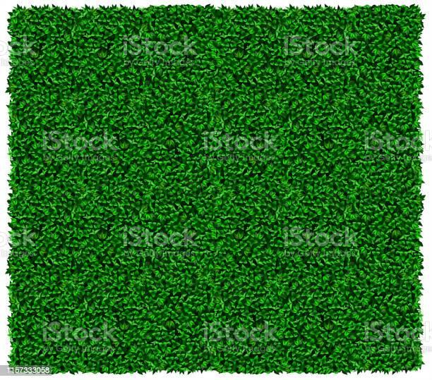 Groene Druif Of Klimop Muur Textuur Stockvectorkunst en meer beelden van Aangelegd