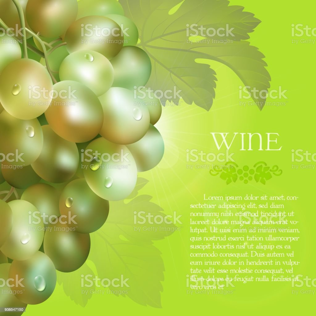 Green grapes bunch with dew drops vector art illustration