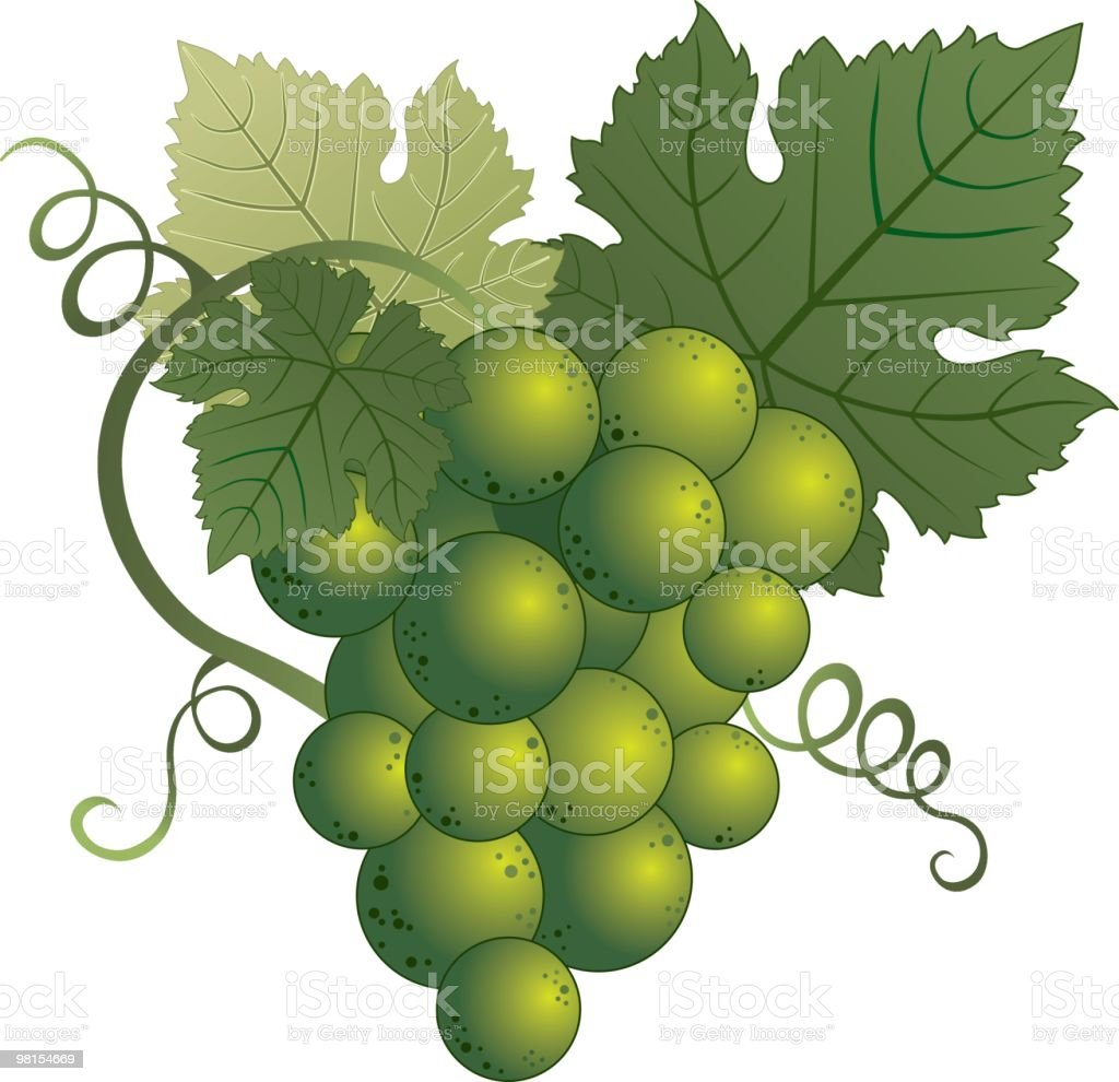 Green Grapes royalty-free green grapes stock vector art & more images of berry fruit
