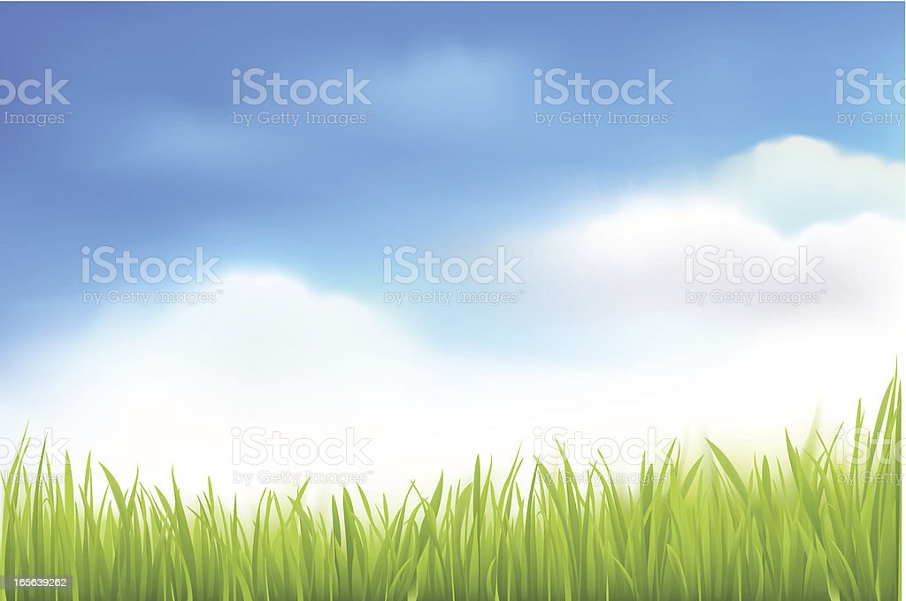 Green Grass and Blue Sky Background royalty-free stock vector art