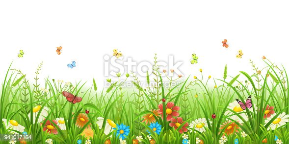 Meadow green grass with flowers and butterflies