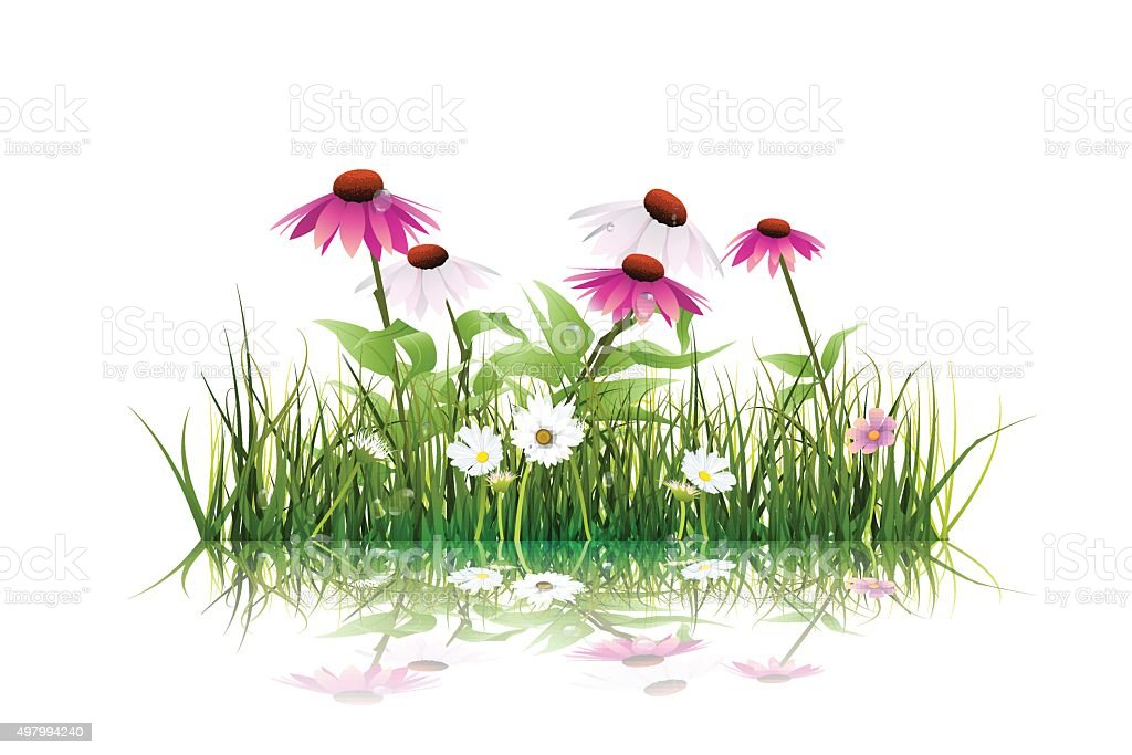 Green grass and purple coneflower on white background vector art illustration
