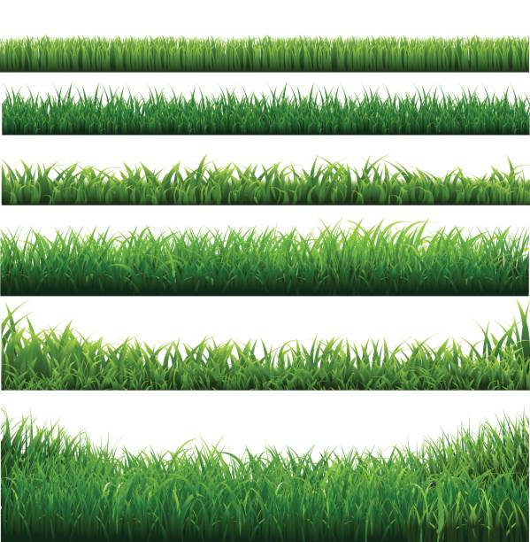 Green Grass Big Borders Collection Green Grass Big Borders Collection, Isolated  Background, Vector Illustration extreme close up stock illustrations