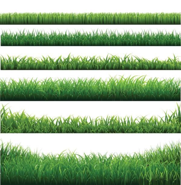 green grass big borders collection - предельно крупный план stock illustrations