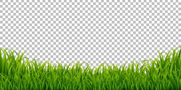 ilustrações, clipart, desenhos animados e ícones de fundo transparente isolado da beira da grama verde, ilustração do vetor - gramado terra cultivada