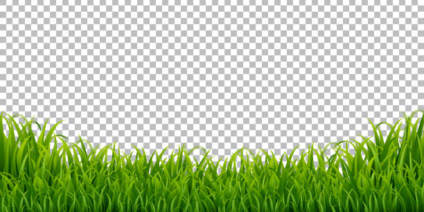 ilustrações de stock, clip art, desenhos animados e ícones de green grass border isolated transparent background, vector illustration - erva