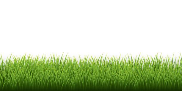 Green grass border set on white background. Vector Illustration Green grass border set on white background. Vector Illustration. grass stock illustrations