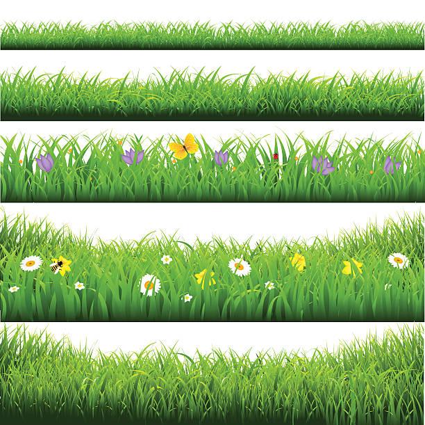 Green Grass Borders Big Set Grass Borders Big Set With Gradient Mesh, Vector IllustrationGreen Grass Borders Big Set, Vector IllustrationGreen Grass Borders Big Set. Vector Illustration EPS10. Contains transparency. bee borders stock illustrations