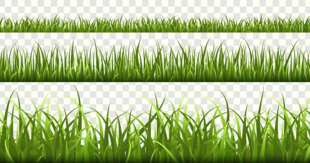 ilustrações, clipart, desenhos animados e ícones de beiras da grama verde. campo de futebol, prado do verão natureza verde, panorama ervas primavera macro elementos, grama do gramado isolado vetor conjunto - gramado terra cultivada
