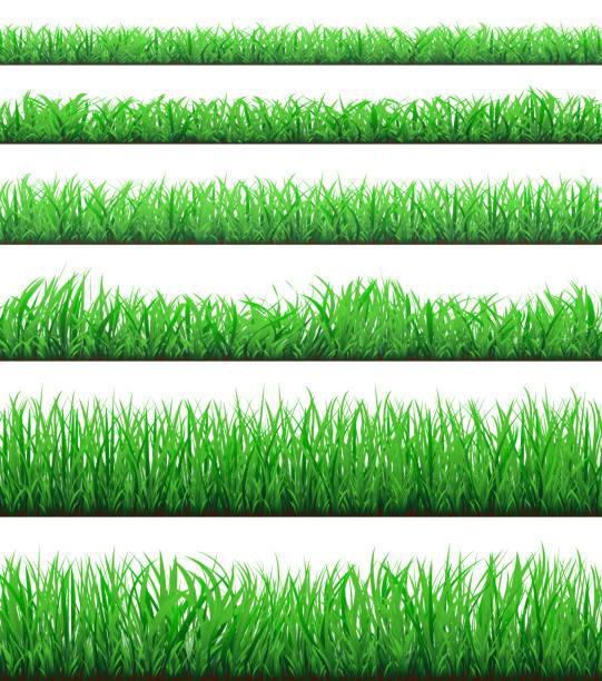 白い背景に分離された緑の草枠セット - 草原点のイラスト素材/クリップアート素材/マンガ素材/アイコン素材